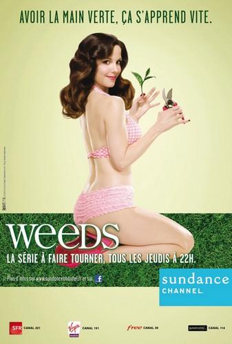 llllitl-weeds-série-drogue-saison-sundance-channel-publicité-print-no-site-agence-mai-2012