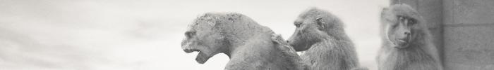 cristal-festival-2014-palmares-agences-publicite-francaises-categorie-print-craft