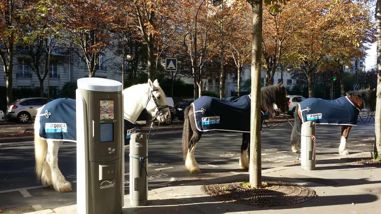 equidia-publicite-street-marketing-cheval-chevaux-hippique-paris-kids-love-jetlag-2