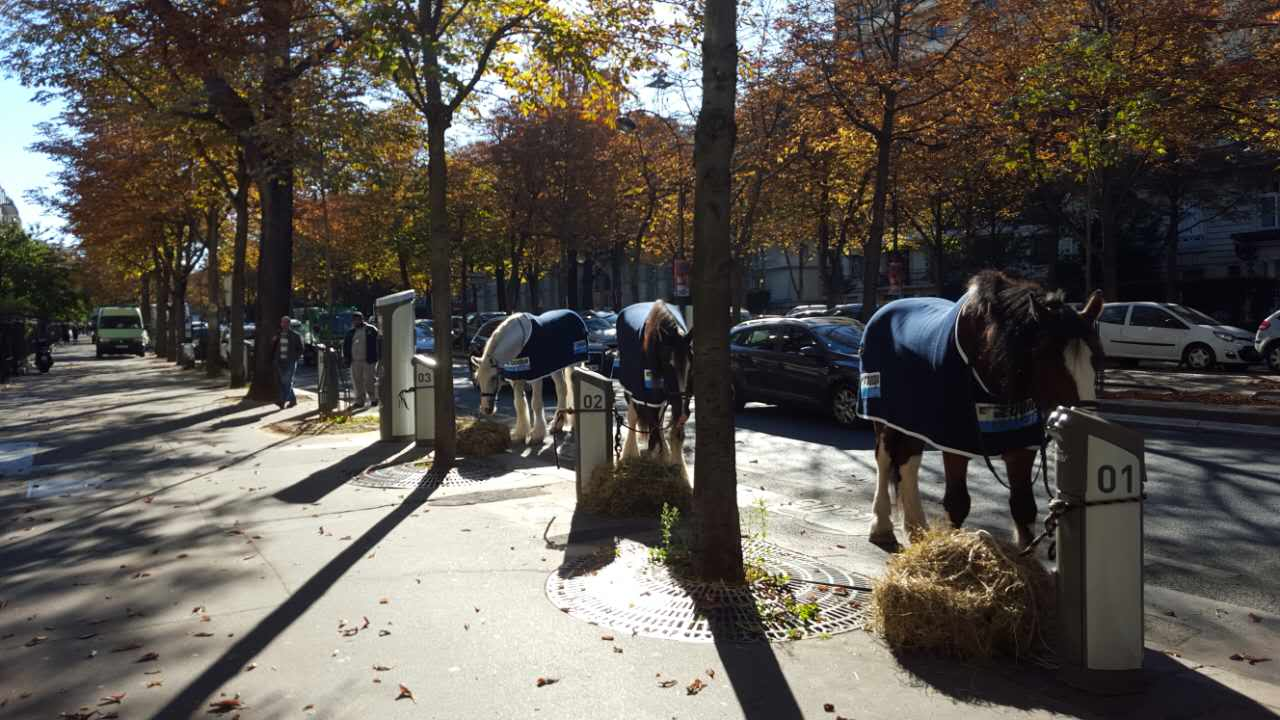 equidia-publicite-street-marketing-cheval-chevaux-hippique-paris-kids-love-jetlag-3