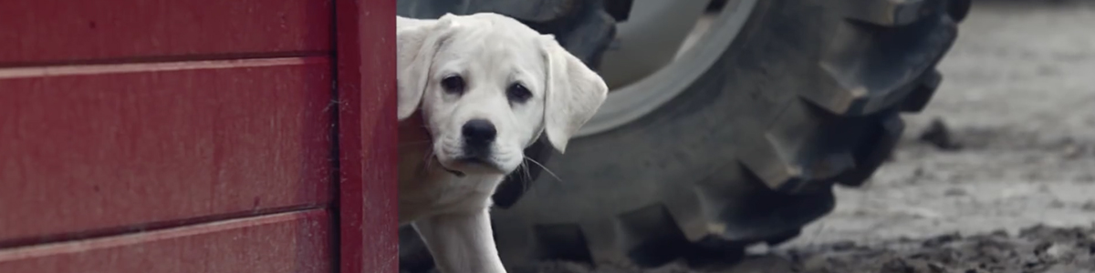 budweiser-friends-puppy-horse-lost-dog-commercial-most-viral-ads-2015