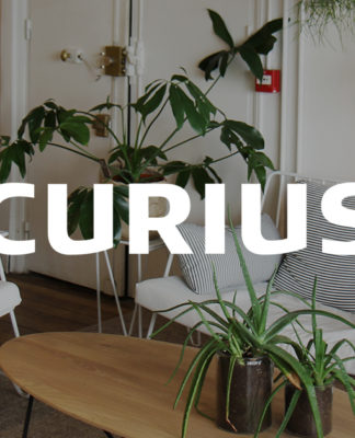 agence-curius-design-paris